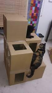 sfr mail pour nos adorables félins chats jeu pour