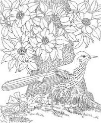 Coloring Page World Bird