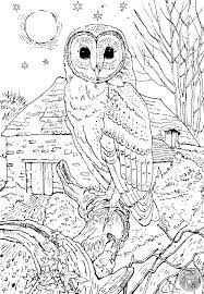 Barn Owl Colouring Page