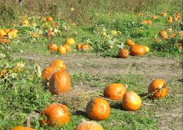 Motley Pumpkin Patch by These Are The Best Pumpkin Patches Around Indianapolis Axs