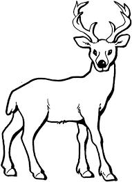 Deer Coloring Page Add Pipe Cleaner Antlers