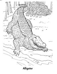Crocodile Coloring Pages Free For Kids