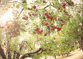 Live Oak Pumpkin Patch Santa Cruz by Oak Glen Riley U0027s Farm Beautiful Autumn Pinterest