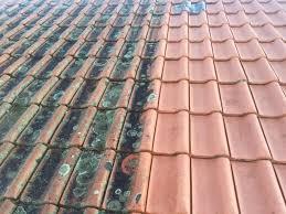 moss removal hilo pressure wash albury wodonga nsw