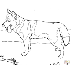 Download Coloring Pages Dog Siberian Husky Page Free Printable