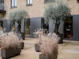 verträgt ein olivenbaum tipps und infos zur frosthärte