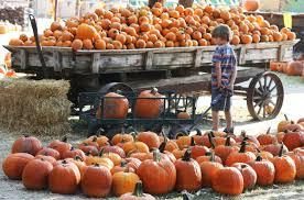 Live Oak Pumpkin Patch Santa Cruz by Bakersfield Com Kern County News Events Shopping U0026 Search
