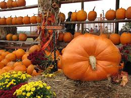 Pumpkin Patch Clarksville Tn 2015 by Pick Your Own Food At These 14 Arkansas Farms