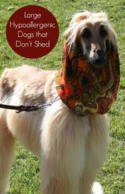 25 best dogs that don t shed images on pinterest sheds dog