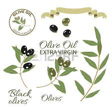 Set for design for olive oil the olive tree branch with olives with typography
