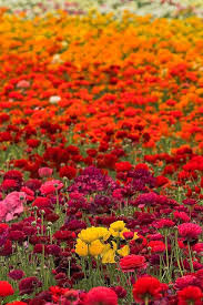 46 best Fields of Flowers images on Pinterest