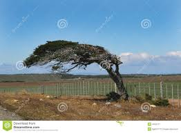 Wind Bent Tree Stock Images - 542 Photos Expert Claims Mysterious Bent Trees Were Secret Native Americans Crooked Forest Wikipedia Stp77089 Greenery And Tree Trunks In Forest Karjat Mahashtra Indian Bent Trees History Or Legend Show Me Oz Larry The Lorry More Big Trucks For Children Geckos Garage New Trucks Bodies Equipment Trailers Seen At Wasteexpo How To Fix A Leaning Tree I Love The Wooden Beds Rarin To Go Ford Mysterious Are Actually American Trail Markers Wind Stock Images 542 Photos Bend Diamonds Ieee Spectrum Black White Alamy