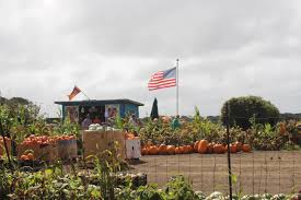 Pumpkin Patches Santa Cruz Area by September 2014 Adventures Of American Julie