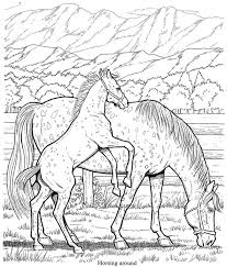 Welcome To Dover Publications Wonderful World Of Horses Coloring Book