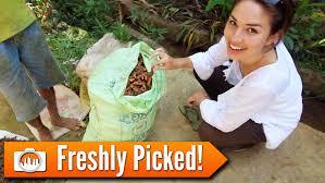 sri lanka 25 freshly picked spices and fruits youtube