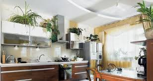 Hibiscus High Aspidistra Californian Cypress Monstera Philodendron And Rubber Plants Make Impressive Floral Design Compositions For Kitchens Decorating