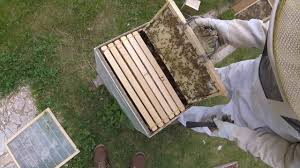 Bee Hive Inspection And Adding Queen Excluder - YouTube Berkshire Bkeeping All About Keeping Bees And Making Honey In Make Your Own Cow Top Bar Bee Hive 7 Steps With Pictures Management Pdf Hives For Sale Boardman Feeder Removing The Queen Excluder From A National At Ness Gardens Lindas Spark Elementary Phase 2 Langstroth Long Hive Rerche Google Ruche Pinterest Bad Luck Judgment Begning For Peakhivescouk Top Bar Beehives Search Apiarium Imkerei Emergency Cell Found Inspection One Month Adventures Of Bkeeper A Journal New Page 3