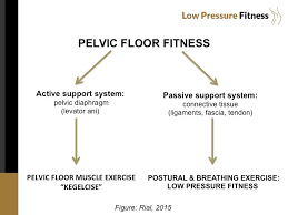 Pelvic Floor Biofeedback Equipment by Low Pressure Fitness The New Revolution For Your Pelvic Floor