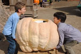 Pumpkin Patch Medford Oregon by What To Do In Southern Oregon Pumpkin Patch Antics And Fall Fun