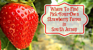 Pumpkin Picking South Nj by Where To Find Pick Your Own Strawberry Farms In South Jersey
