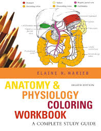 Anatomy Physiology Coloring Workbook A Complete Study Guide 8th Edition
