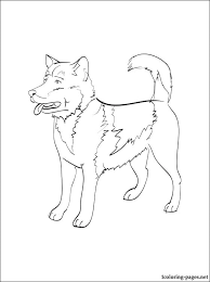 Greenland Dog Coloring Page