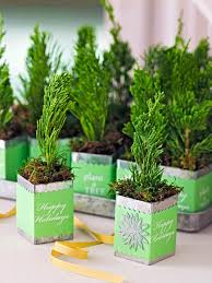 Plantable Christmas Tree Ohio by Decorate With Tiny Christmas Trees Midwest Living