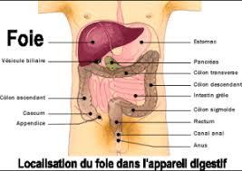 interieur corps humain femme le souffle du menhir les organes du printemps foie