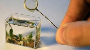 16 aquariums walyou