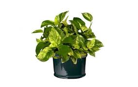 Best Pot Plant For Bathroom by 7 Indoor Plants That Purify The Air Around You Naturally