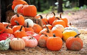 Pumpkin Patch Lafayette Al by Pumpkin Patch Offers A Fall Paradise For All Ages Lifestyles