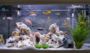feuchtigkeit durch aquarien verhindern schimmelprotektor