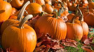 Pumpkin Patches Near St Peters Mo by New Pumpkin Patch To Open In Wake Of Rombach Farms Closing Ksdk Com