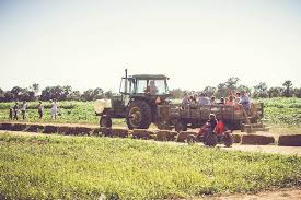 Pumpkin Patch Near Pensacola Fl by Top 10 Pumpkin Patches To Visit This Fall In Florida