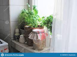 kräuter in der küche stockbild bild küche kräuter