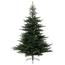 Balsam Christmas Trees Uk by Kaemingk Everlands Grandis Fir Christmas Tree 6ft Charlies Direct