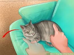 How To Keep Cats Away From Furniture Maximpep charming How To
