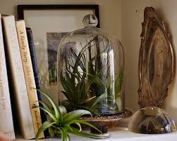 Plants For Bathroom Without Windows by Gardening 101 How To Water An Air Plant Gardenista