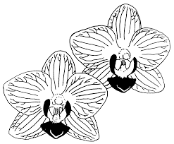 gousicteco Orchid Clipart Black And White