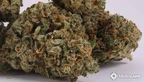 The 50 Best Weed Strains Honest Marijuana