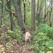 Eby Pines Christmas Trees Hours by An Autumn Hike At The Olin Lake Nature Preserve In Lagrange County
