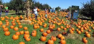 Pumpkin Picking Nj 2015 by Apple Ridge Orchards U2013 New York U0027s Most Scenic Orchard