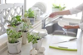 lecker und dekorativ ein kräutergarten in der küche