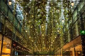 Why Plants Belong in Every Workplace Sustainne