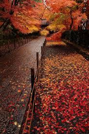 Pumpkin House Kenova Wv 2016 by 14 Best Yedigöller Parque Nacional Images On Pinterest National