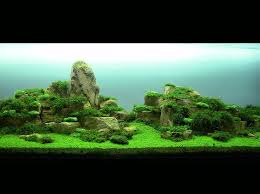 116 best Aquascaping images on Pinterest