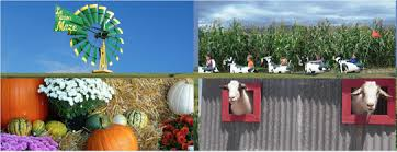Pumpkin Patch Las Cruces 2015 by Home Hours And Pricing