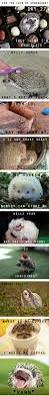 What Heat Lamp To Use For Hedgehogs by 856 Best Hedgehogs Images On Pinterest Baby Hedgehogs Baby