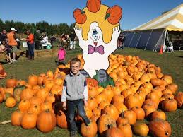 Pumpkin Farm In Palos Hills by Best Pumpkin Patches And Farms Near Chicago
