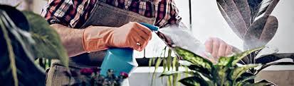 zimmerpflanzen bei hornbach kaufen